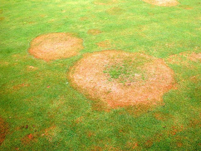 how to fix brown patch lawn disease