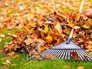Ensure Fallen Leaves are Raked
