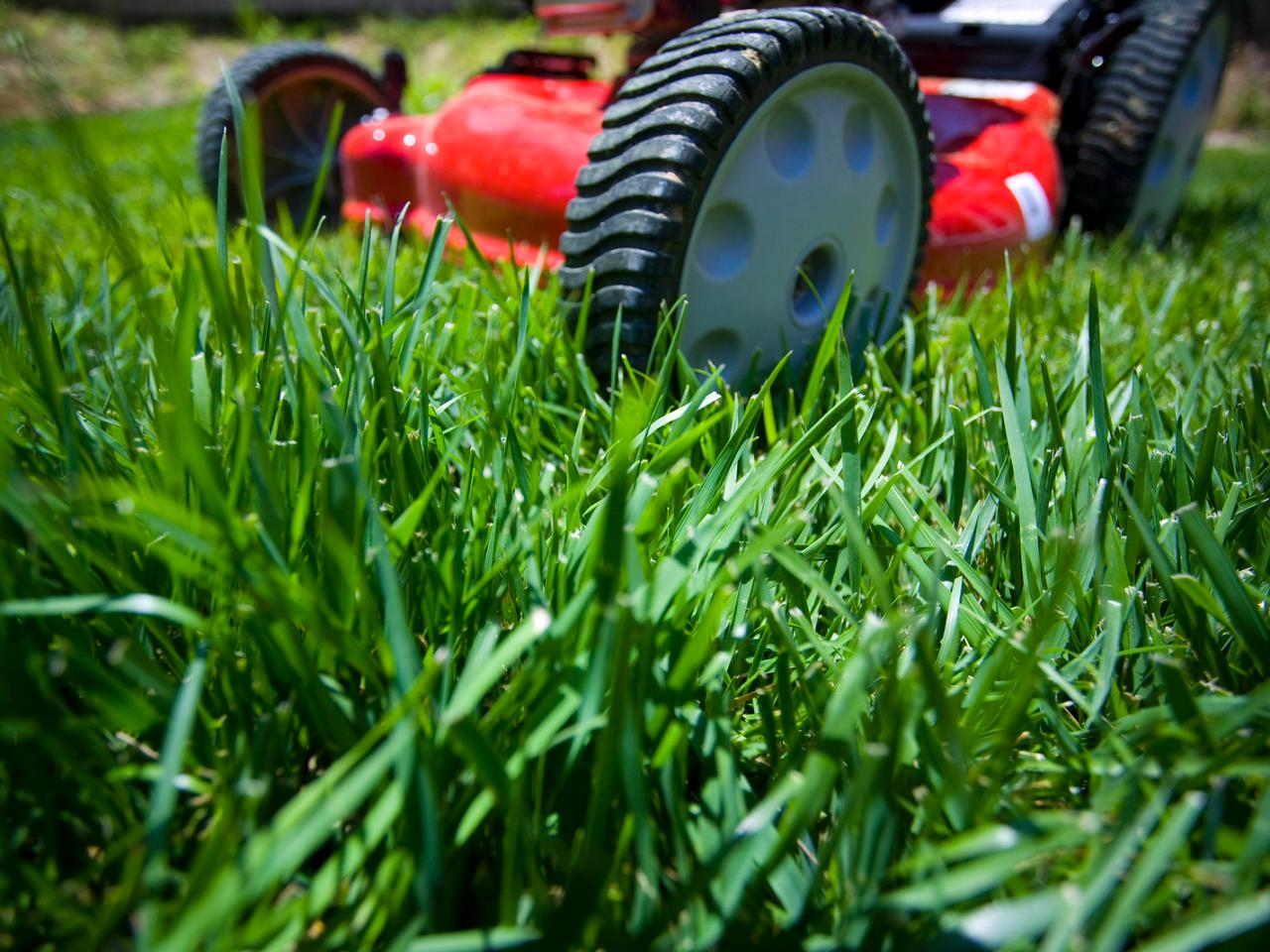 New turf care tips garden turf tips for Care for new sod